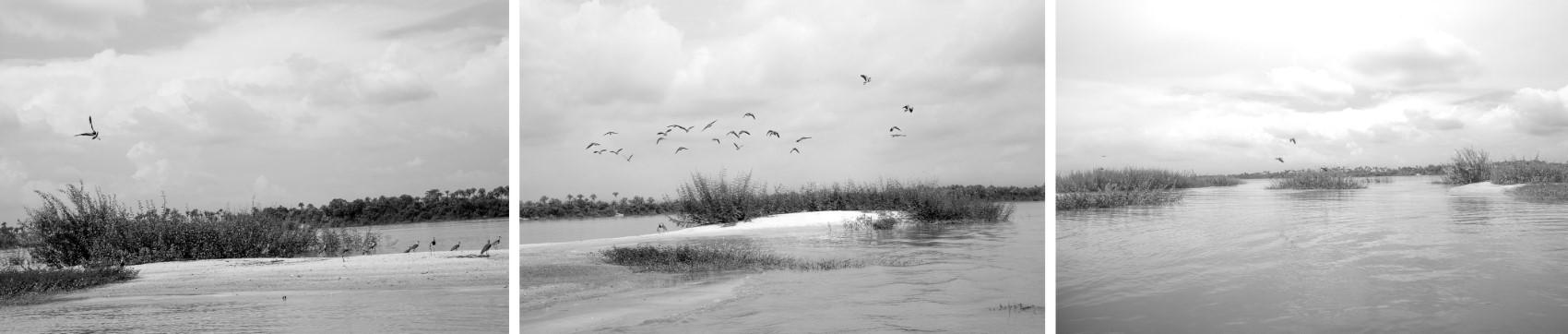 Pássaros - TO - Brasil