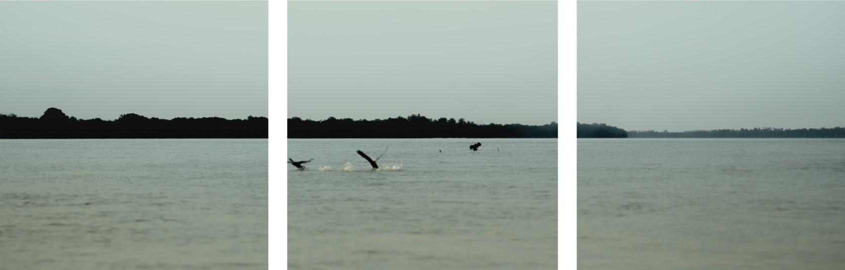 Pássaros voando - TO - Brasil