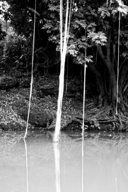 Floresta na margem - TO - Brasil